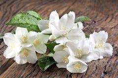 Flores del jazmín sobre la tabla de madera vieja Foto de archivo