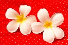 Flores del Lan Thom Foto de archivo libre de regalías