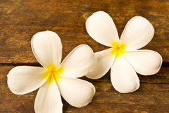 Flores del Lan Thom Fotografía de archivo libre de regalías
