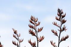 Flores del lino Foto de archivo