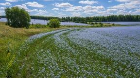 Flores del lino Campo del lino, lino que florece, cultivo agrícola del lino imágenes de archivo libres de regalías