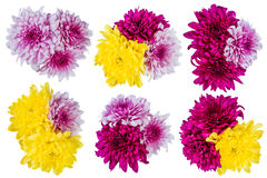 Flores del lirio aisladas Foto de archivo libre de regalías