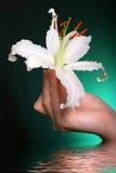 Flores del lirio blanco en agua Foto de archivo libre de regalías