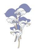 Flores del lirio de cala stock de ilustración
