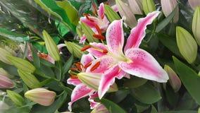 Flores del lirio de la belleza Fotos de archivo libres de regalías