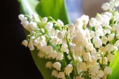 Flores del lirio de los valles, pequeños lirios hermosos, frescos de las flores del valle imagenes de archivo