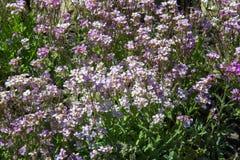 flores del macizo de flores Cama plantada del jardín de flores bajo la forma de A.C. fotografía de archivo