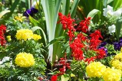flores del macizo de flores Cama plantada del jardín de flores bajo la forma de A.C. foto de archivo