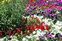 flores del macizo de flores Cama plantada del jardín de flores bajo la forma de A.C. fotos de archivo libres de regalías