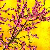 Flores del melocotón en el jardín Foto de archivo libre de regalías