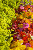 Flores del mercado Imágenes de archivo libres de regalías
