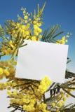 Flores del Mimosa con la tarjeta en blanco fotografía de archivo