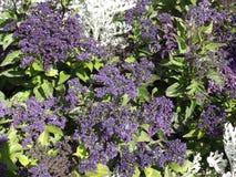 Flores del molino Fotos de archivo libres de regalías
