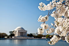Flores del monumento de Jefferson del Washington DC Foto de archivo