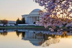 Flores del monumento y de cereza de Jefferson Foto de archivo libre de regalías