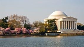 Flores del monumento y de cereza de Jefferson Foto de archivo