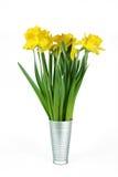 Flores del narciso imágenes de archivo libres de regalías