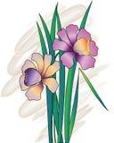 Flores del narciso Fotografía de archivo