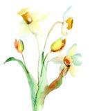 Flores del narciso Fotos de archivo
