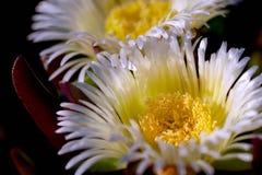 Flores del océano Foto de archivo libre de regalías