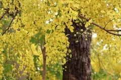 Flores del oro Fotos de archivo
