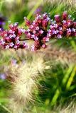 Flores del otoño. Fotos de archivo libres de regalías