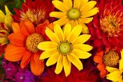 Flores del otoño imagenes de archivo