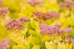 Flores del otoño Foto de archivo libre de regalías