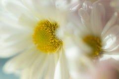 Flores 1 del otoño Imagenes de archivo