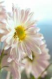 Flores 2 del otoño Fotos de archivo libres de regalías