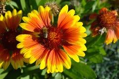 Flores del otoño Fotos de archivo libres de regalías