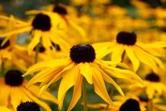 Flores del otoño Fotografía de archivo libre de regalías