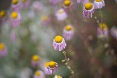 Flores del otoño Fotografía de archivo