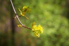 Flores del pantano fotografía de archivo libre de regalías