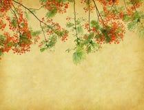 Flores del pavo real en árbol Imagen de archivo