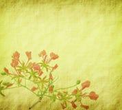 Flores del pavo real en árbol Imagenes de archivo