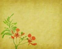 Flores del pavo real en árbol Fotos de archivo