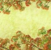 Flores del pavo real en árbol Imagen de archivo libre de regalías