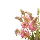 Flores del pipirigallo fotografía de archivo libre de regalías
