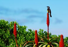 Flores del pájaro y del cacto Imagenes de archivo