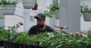 Flores del pote con los jardineros en fondo almacen de video