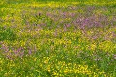 Flores del prado Fotografía de archivo libre de regalías