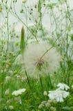 Flores del prado Foto de archivo libre de regalías