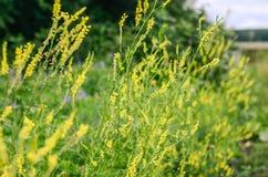 Flores del prado Fotografía de archivo