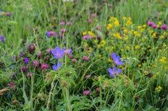 Flores del prado Fotos de archivo