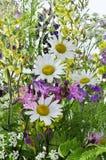 Flores del prado Fotos de archivo libres de regalías