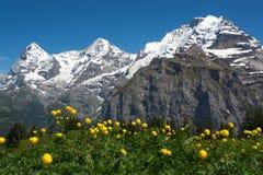 Flores del prado cerca de Murren, Suiza Imagen de archivo