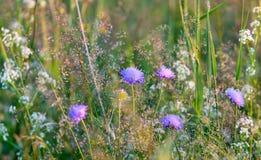 Flores del prado en día soleado Fotografía de archivo