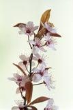 Flores del primer Imagen de archivo libre de regalías
