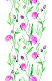 Flores del ranúnculo en acuarela Imagen de archivo libre de regalías